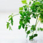 Aké bylinky na dozdobenie jedla